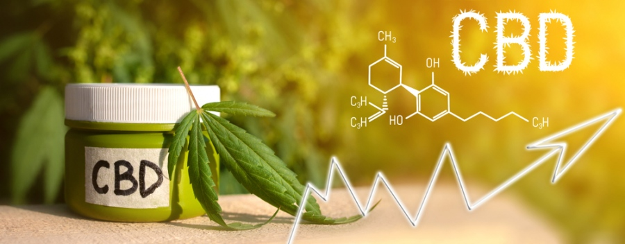 Everything You Need To Start A Successful CBD Business – From The Launch Party To Payday
